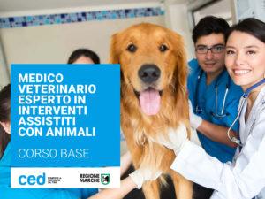 MEDICO VETERINARIO ESPERTO IN INTERVENTI ASSISTITI CON ANIMALI (IAA) - LIVELLO BASE